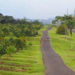 ハワイ島滞在記♪第四弾 観光編~ハワイ島といえばコーヒー!農園を訪問~